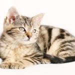 猫にとってお香は悪影響!?使っても大丈夫なの?
